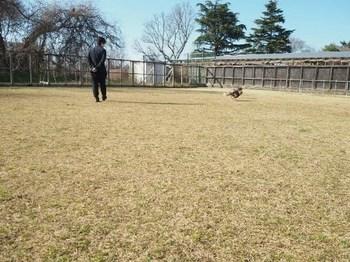 つくばわんわんランド ドッグワンド4.jpg