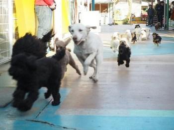 つくばわんわんランド小型犬.jpg