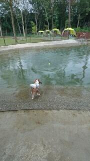 ドギーズアイランド池で遊ぶ.jpg