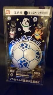 ふしぎボールで遊ぶキャバリア.jpg