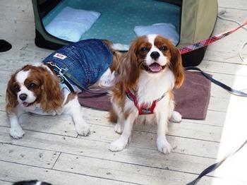 ホリデーコーヒー看板犬と記念撮影.jpg