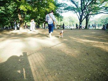 代々木公園ドッグランキャバリア.JPG