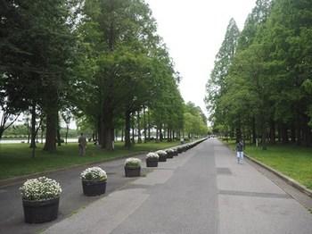 水元公園広い.JPG